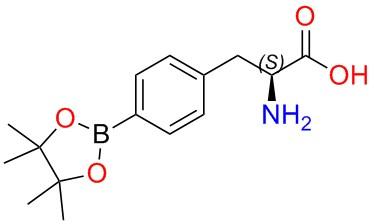Boronophenylalanine